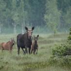 Эко-экскурсия в Полистовский заповедник с посещением Плавницкого болота  от туроператора «Атмосфера путешествий» в Пскове