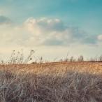 Тур «Большая Псковская Энциклопедия» (поезд) от туроператора «Атмосфера путешествий» в Пскове